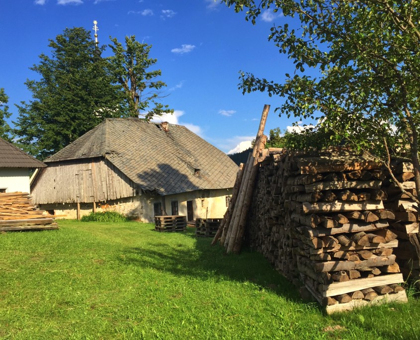 sorca_drva